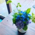 リトルラグーン・リエコさんからの紫陽花